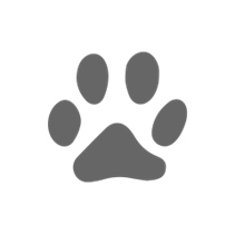 Заказать Stout Корм сух.д / кошек Ягненок/рис по цене 4230 руб
