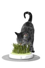 Заказать Hagen / сад с травой для кошек Catit Design Senses по цене 1490 руб