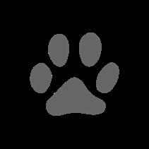 """Заказать Расческа Мини для животных """"Лапка"""", фуксия (Pet Angel Mini Pet Angel MiniFab Fuchsia)  по цене 990 руб"""