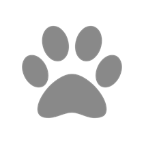 Schesir Bio Adult Chicken / Консервы Шезир Био для собак Курица (цена за упаковку)
